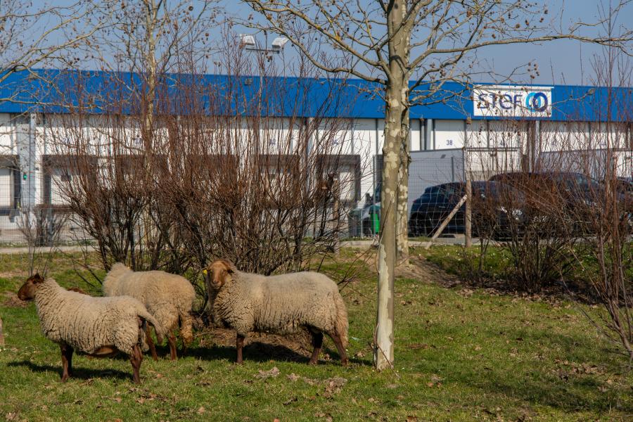 Reportage  photo  activités digitales - STEF Carquefou